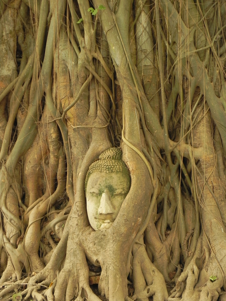 2.The Iconic Head of Buddha in a Bodhi Tree